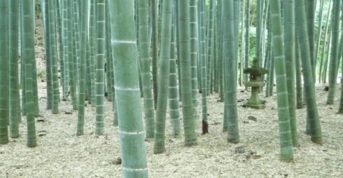 Hōkoku-ji garden (報国寺)