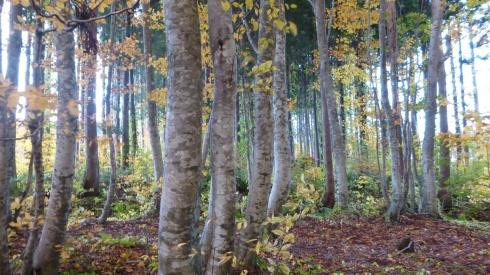 Fall in oirase 3