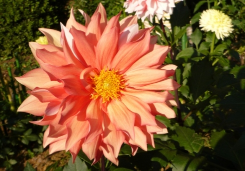 orange  flower (640x449)