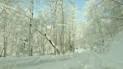 Oirase gorge in Winter (640x360)